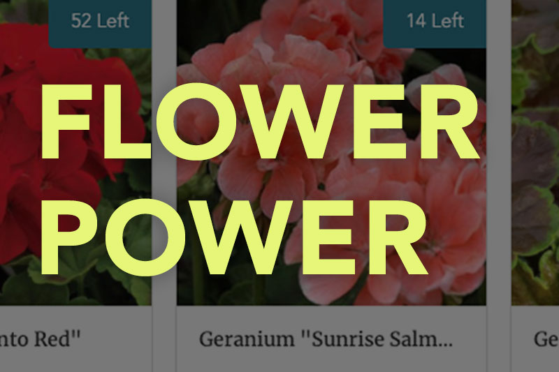 How to Run a Successful Plant or Flower Sale Fundraiser